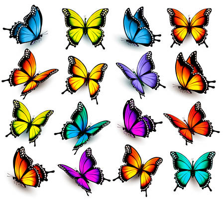 bugs: Big collection of colorful butterflies. Vector Illustration