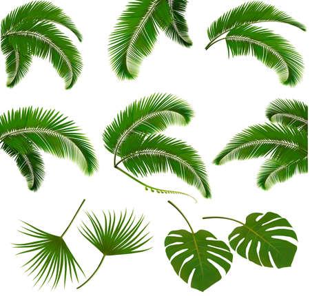 Zestaw liści palmowych na białym tle. ilustracji wektorowych. Ilustracje wektorowe