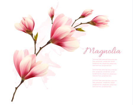 fragile peace: Nature background with blossom brunch of pink flowers. Vector