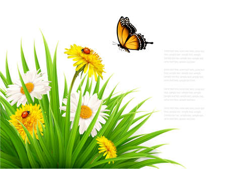 butterfly background: Nature summer background with daisy flower with butterfly. Vector illustration.