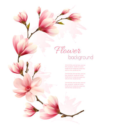 magnolia tree: Nature background with blossom brunch of pink flowers. Vector
