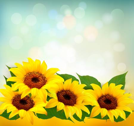 crop circle: Sunflowers Background With Sunflower And Leaves. Vector.