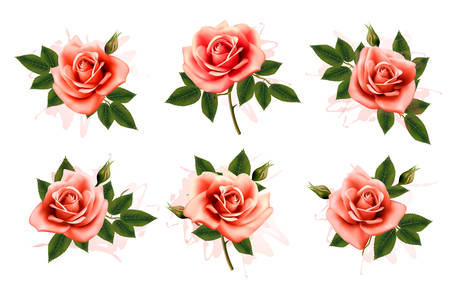 red rose bouquet: Beautiful set of pink ornate roses with leaves. Vector.