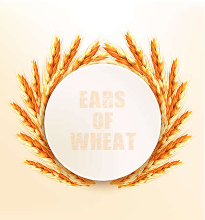 the spikes: Ears of wheat. Vector illustration.