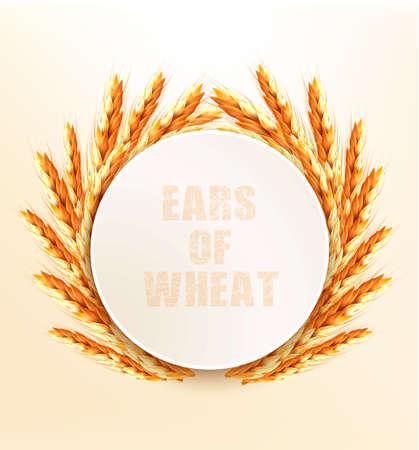 rye: Ears of wheat. Vector illustration.