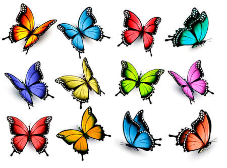 Collection of colorful butterflies, flying in different directions. Vector. 版權商用圖片 - 60173142