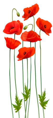 Bunch of poppies. Flower background. Vector. Illustration