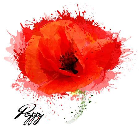 Mooie aquarel bloem poppy tekening. Vector. Vector Illustratie