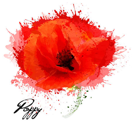 Beautiful watercolor flower poppy drawing. Vector.