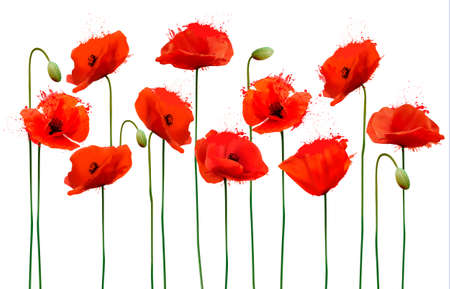 Abstract background with red poppies flowers. Vector. Vettoriali