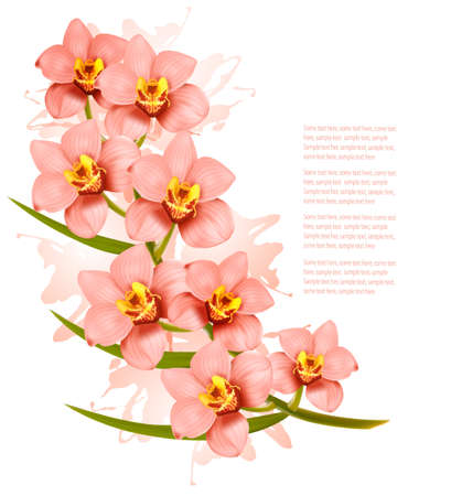 pink orchid: Group of beautiful pink orchid flowers. Vector.