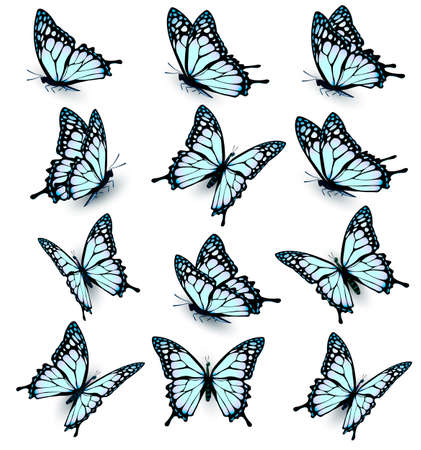 mariposas volando: Collection of blue butterflies, flying in different directions. Vector. Vectores