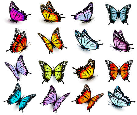 six objects: Collection of colorful butterflies, flying in different directions. Vector.