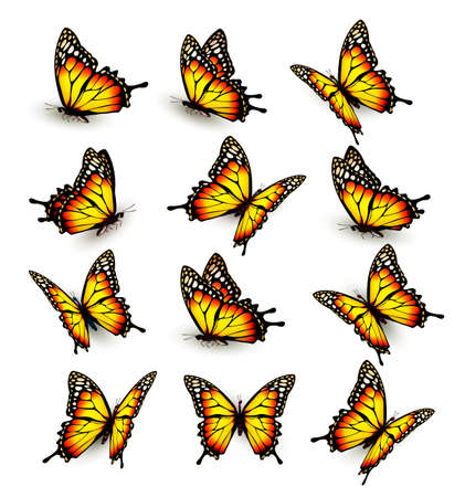 Collection of yellow butterflies, flying in different directions. Vector.