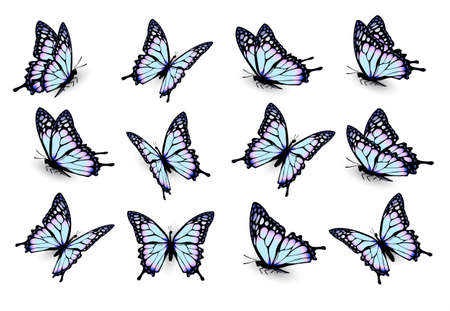 butterflies flying: Set of blue butterflies, flying in different directions. Vector.