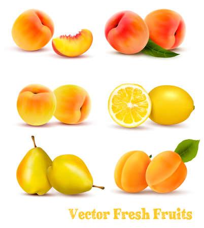 노란색과 오렌지 과일의 큰 그룹입니다. 벡터.