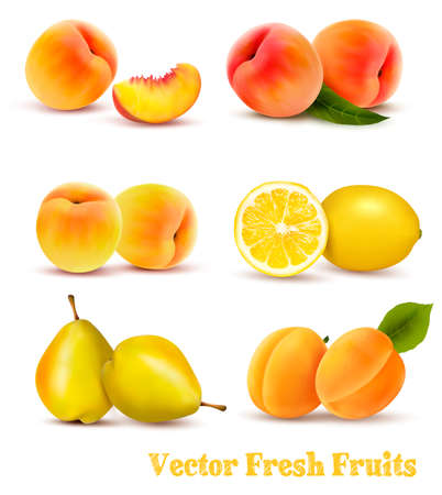 Big Group Of Yellow And Orange Fruits. Vector. Çizim
