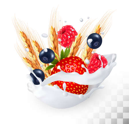 Strawberry and blueberry and raspberry and wheat in a milk splash on a transparent background. Vector icon.