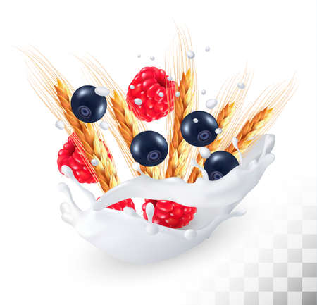 ear drop: Raspberries and blueberry and wheat ear in a milk splash on a transparent background. Vector.
