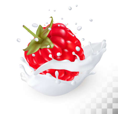 Juicy raspberry in a milk splash on a transparent background. Vector.