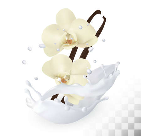 Vanilla sticks with flowers in a milk splash on a transparent background. Vector.
