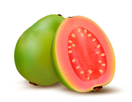 Fresh green Guava fruit. Vector.