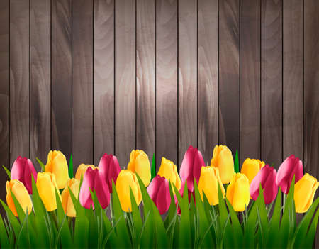 tulips in green grass: Nature spring background with colorful tulips on wooden sign. Vector. Illustration