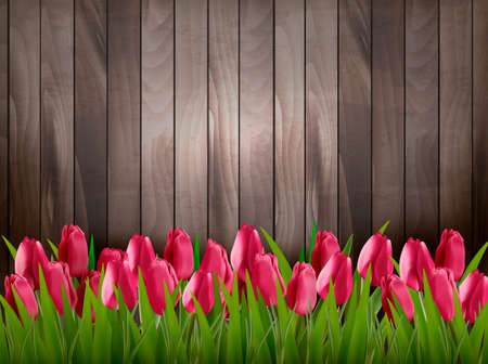 tulips in green grass: Nature spring background with red tulips on wooden sign. Vector.