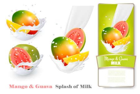 fruit stem: Mango and guava in milk splashes. Vector.