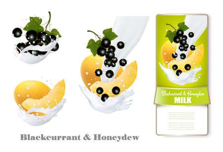 Blackcurrant and honeydew melon in milk splashes. Vector.