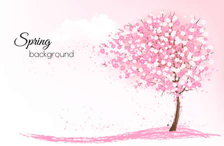 Spring nature layout with a pink blooming sakura tree.
