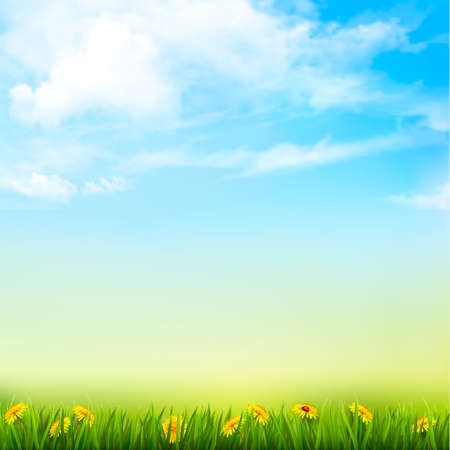 sky and grass: Spring Nature Background With A Green Grass And Blue Sky With Clouds. Vector.