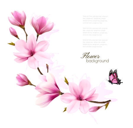 Nature background with blossom branch of pink magnolia and butterfly. Vector