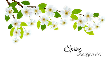 paper texture: Spring background with white flowers. Vector. Illustration