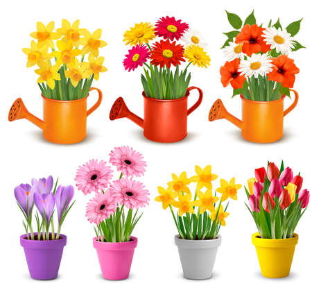 Spring and summer colorful flowers in pots  Vector Illustration