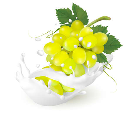 Green grapes in a milk splash on a transparent background. Vector.