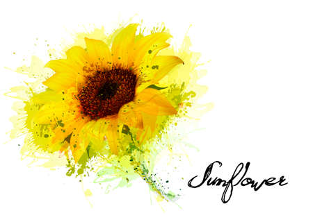 Nature background with yellow sunflower. Vector