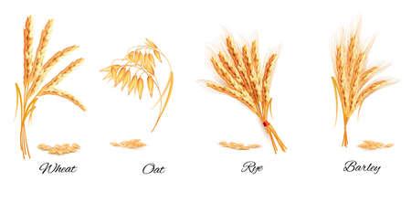 Oren van tarwe, haver, rogge en gerst. Vector illustratie.