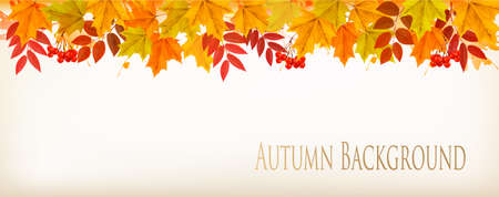 Panorama Fall Autumn Colorful Leaves Background. Vector. Illustration