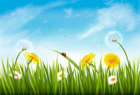 Nature background with green grass, flowers and a butterfly vector illustration.