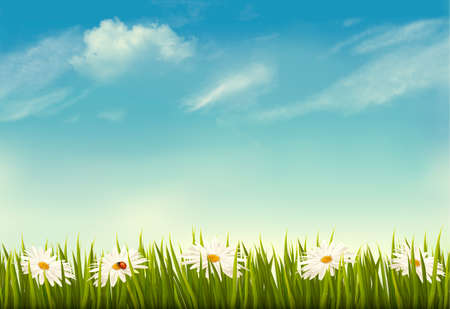 Spring nature background with green grass and sky vector illustration.