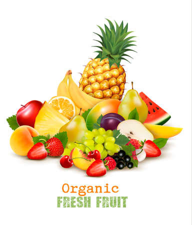 Big collection of different organic fresh fruit. Vector.