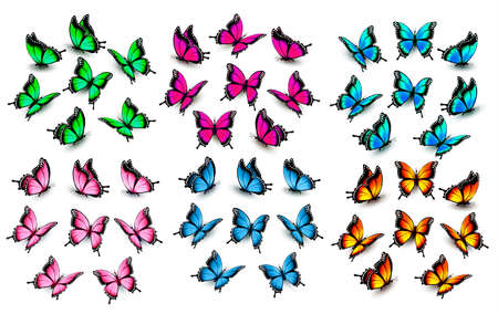 Ensemble de papillons colorés. Vecteur. Vecteurs