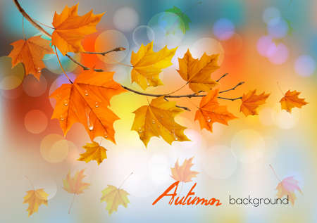 Autumn nature background with colorful leaves and drops. Vector illustration.