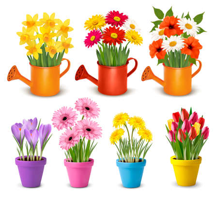 Big collection of spring and summer colorful flowers in pots.