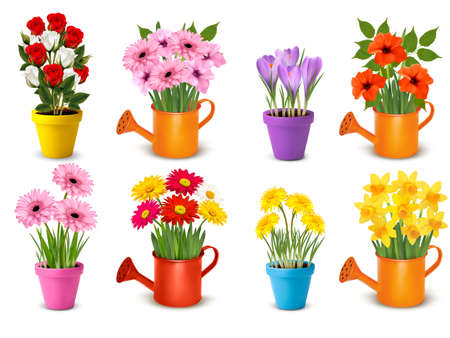 Mega collection of spring and summer colorful flowers in pots.