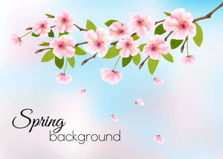 Nature spring background with pink blossom cherry.