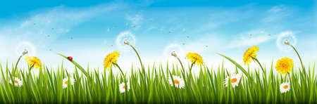 Nature spring panorama with green grass, flowers and a blue sky.