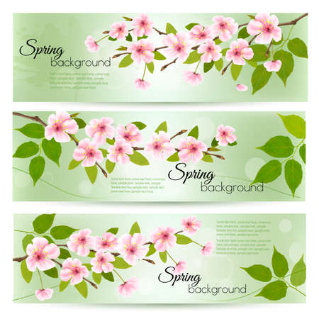 Spring nature background with cherry branch and green leaves. Vector
