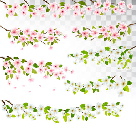Several blossom of cherry and sakura borders. Vector. Иллюстрация